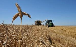 Farmers harvest a corn field on July 23,